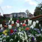 Blumenmeer im Hafen Colmar